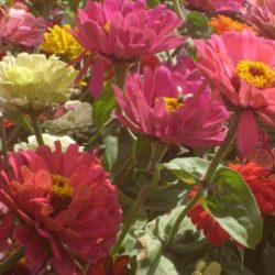 Flor mode 2t (1 de 1) (1)